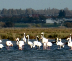 Pink flamingos from Moulay Bousselham | Vila Bea